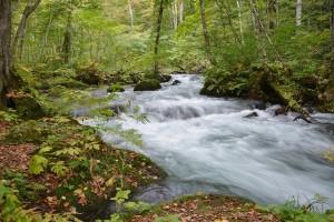 大小の流れと滝を感動に溢れ散策「静と動」の流れに心動く!!